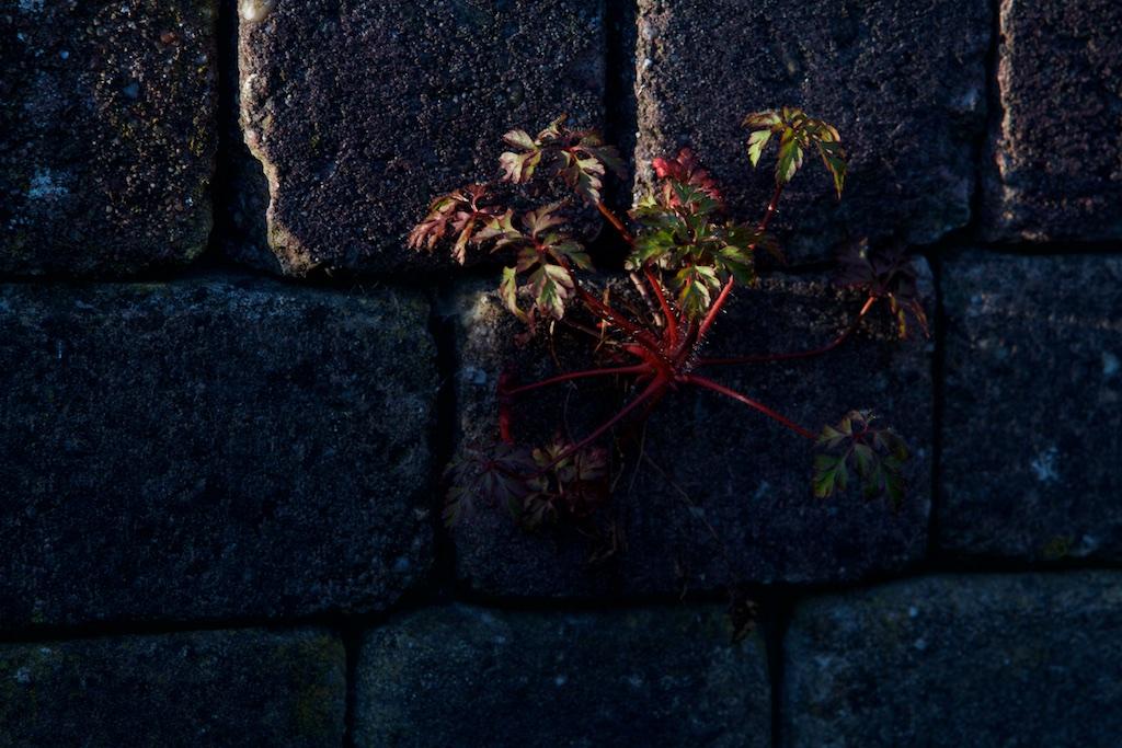 De natuur een ander woord voor zijn de tijd for Substraat betekenis